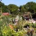 Ботаническата градина в Балчик навършва 61 години