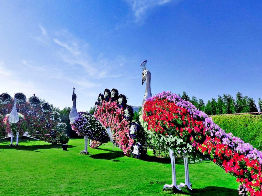 garden-of-miracles-dubai-05