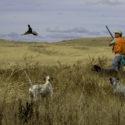 Днес се открива ловният сезон за прелетен дивеч