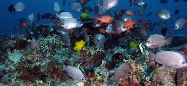 Най-големият морски резерват в света ще бъде на Хаваите