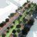 """Линеен парк и зелено трамвайно трасе предлагат за бул. """"Македония"""" от """"Спаси София"""""""