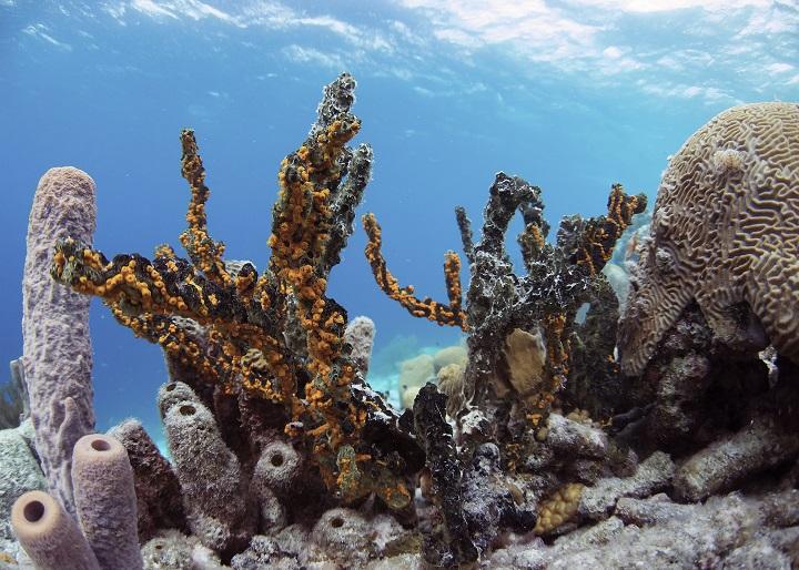 rifove-cousteau-01