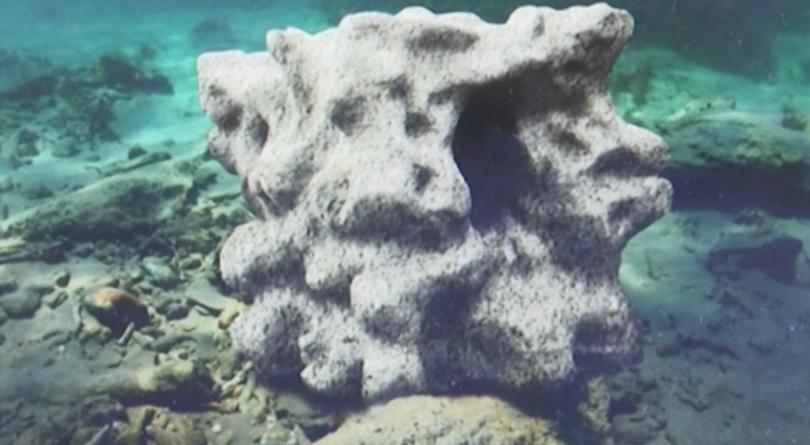 rifove-cousteau-fabien