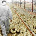 Румен Порожанов: Очакваме още огнища на птичи грип, но няма опасност за хората