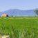 Евросъюзът стартира план за нисколихвени кредити за млади фермери