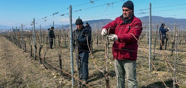 Грузия ще произвежда вино на Марс