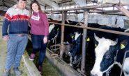 Пианистка гледа 200 крави на село